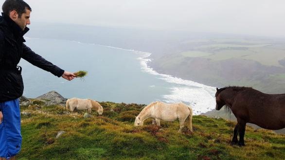 Wid horses.jpg